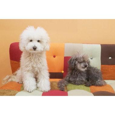 DOG SALON&HOTEL Woo-Nie(ホテル)