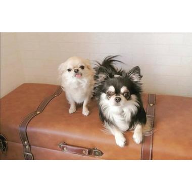 Dog Salon Boo&Poo