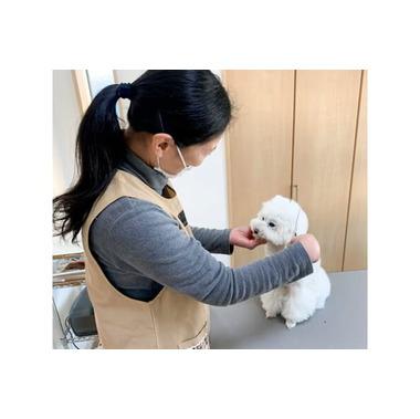 Dog salon ぽかぽか