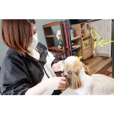 Dog salon Le lien