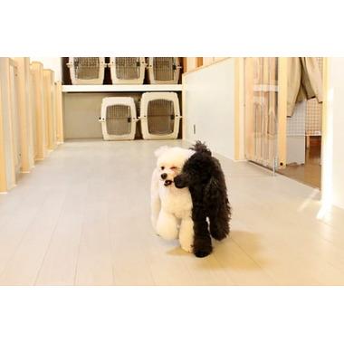 DOG Kreis 上田店