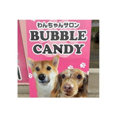 わんちゃんサロン BUBBLE CANDY