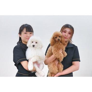Dog Trimming Salon Sally