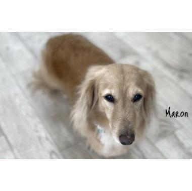 dogsalon maron