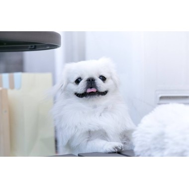 dog salon waza