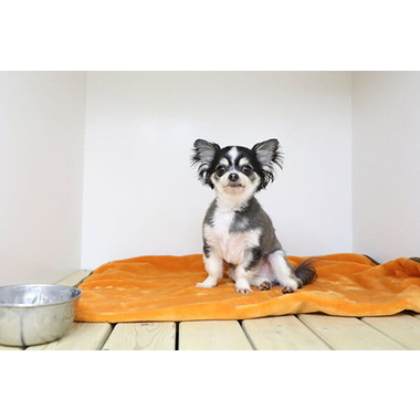 Pet Salon Birthday 渋谷店