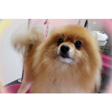 ペットサロン Peace Dog