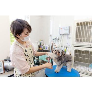 Dog Salon Supica