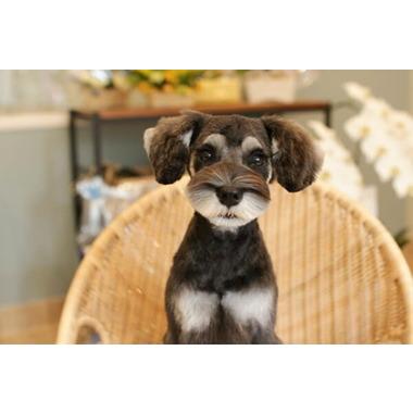 Dog salon Snuggle