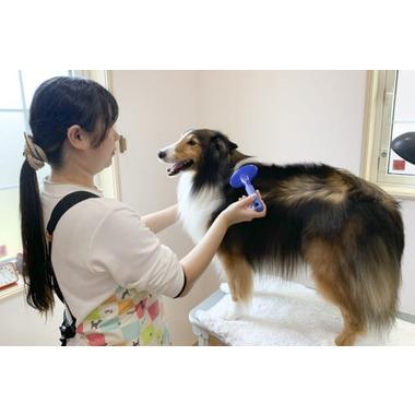 Dog salon プレシャス