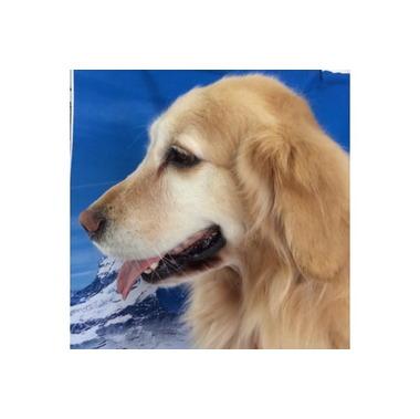 DOG SALON R&D