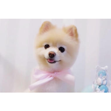 Dog Salon MERRY