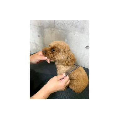 Dog salon CHARME