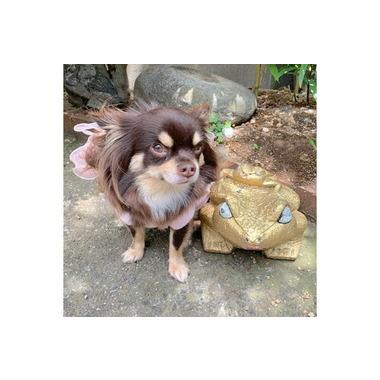 訪問dogcare チェリーブロッサム