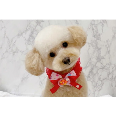 Dog Salon LULEA