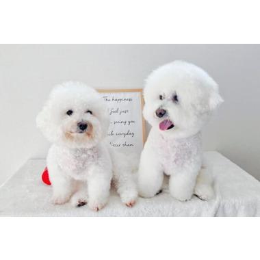 DOG Shampoo&Esthetic Salon PONKOHA