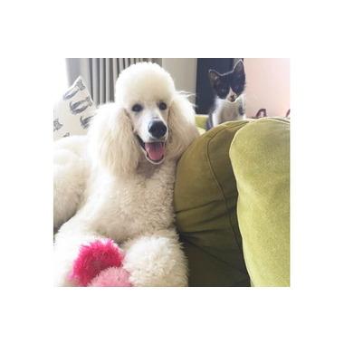 DOG SALON ACCA