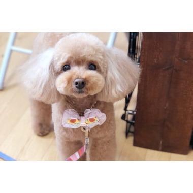 Dog Salon nicco