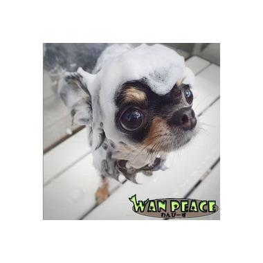 DOG salon WAN PEACE