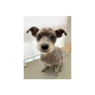 【11/1 OPEN】Pet salon More クープル南原【先行予約受付中】