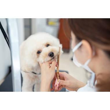【10/16OPEN】Dog Salon Welina