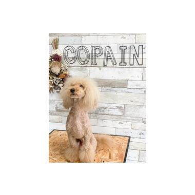 Dog Salon Copain