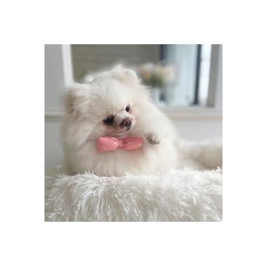 【10/1 OPEN】HAPPY COCO pet care salon