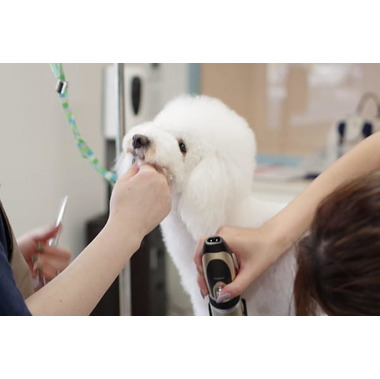 Dog Salon 6136