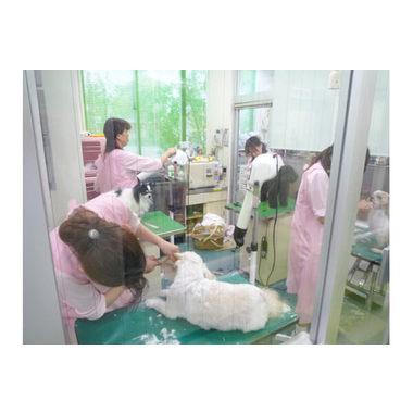 和歌山動物医療センター(トリミング)