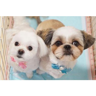 犬の美容室 おさんぽ
