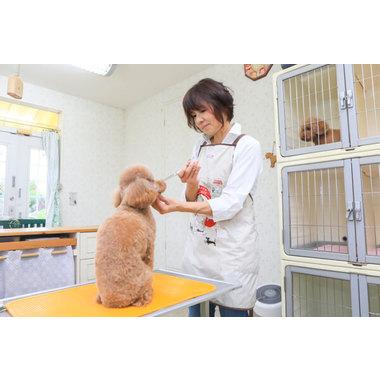 犬の美容室 ワンルーム