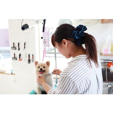 犬のシャンプー屋さん KAI