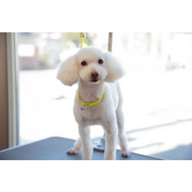 愛犬の美容室キャンキャン