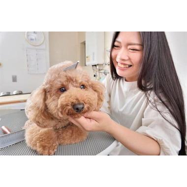 トリミングサロン MOFF(北川犬猫病院 併設)