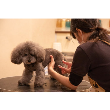 Dog Styling Salon SAMPO