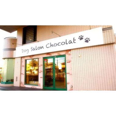Dog salon chocolat