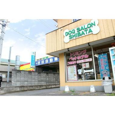 DOGサロン シバタ(AIAI関宿店)