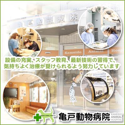 亀戸 動物 病院