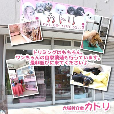 犬猫美容室 カトリ