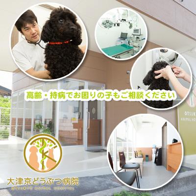 大津京どうぶつ病院(トリミング)