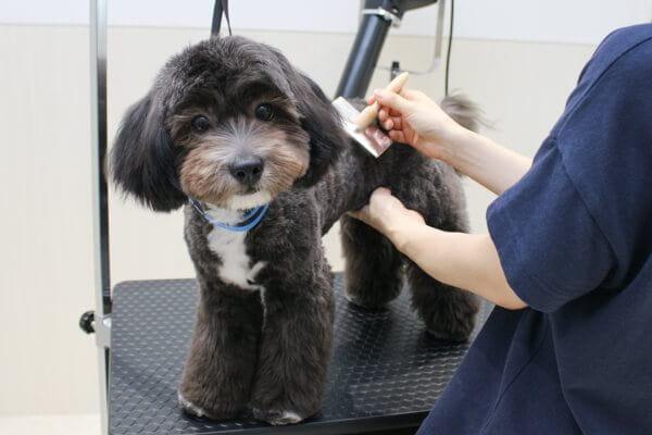 Dog Grooming Cureのトリミング風景