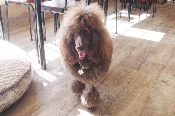 Dog cafe Jule トリミングルーム