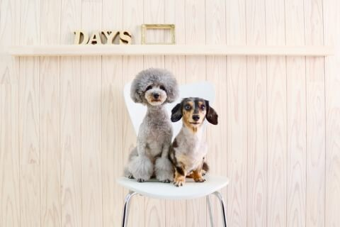 dog styling salon Day's ワンちゃん写真