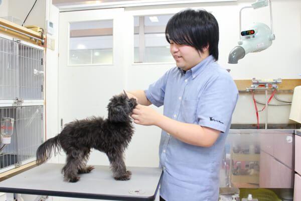 ペットショップ プチマリア 五福アリス店