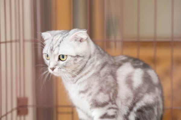 ペットショップ Wan step 猫写真