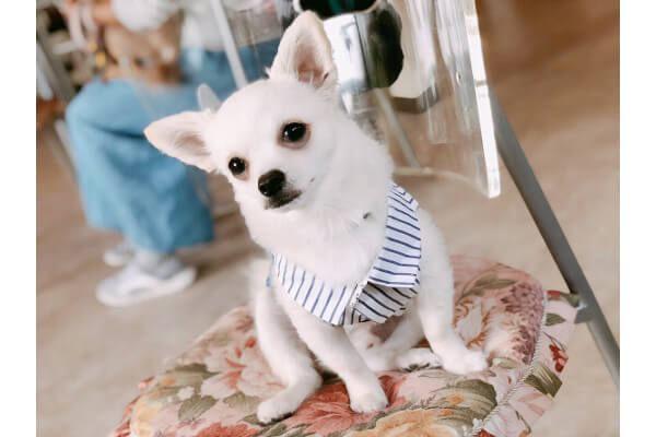 Dog Aco 犬