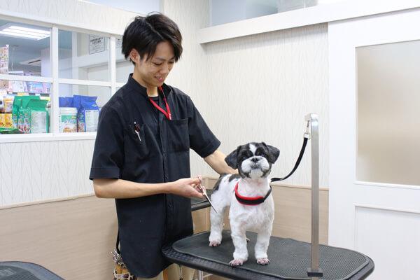 ペットの専門店 コジマ 両国店 カット画像