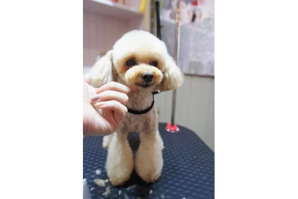 dogdesign Lieb Ling 犬
