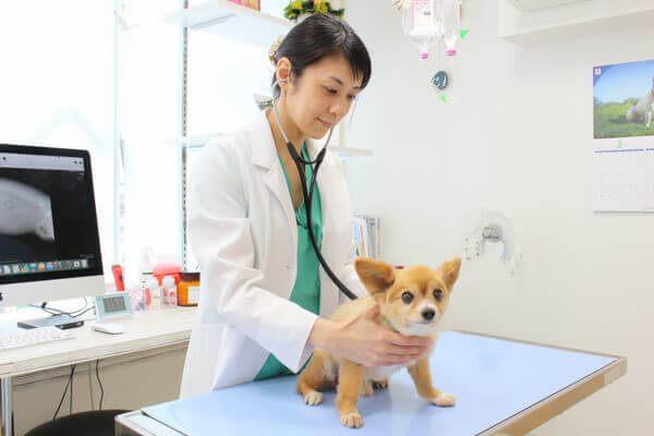 獣医師が傍にいるので異常がある場合も即対応可能です