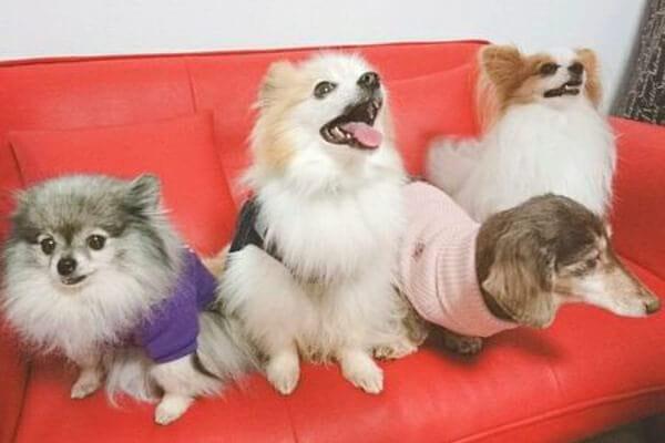犬の保育園 のびるいぬ